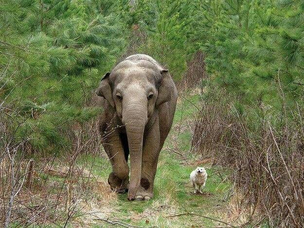 tara-elephant-bella-dog
